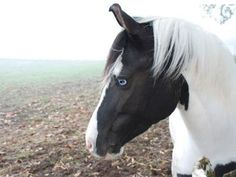 Image result for Breeds of Horses