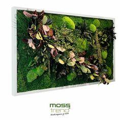 Gotowa ramka z mchem Moss Trend. Dekoracja bez nawadniania i pielęgnacji. Zielona ściana z mchu. #mech #moss #wystrojwnetrz #zieloneściany #chrobotekreniferowy #chrobotek @banditdesign @mosstrend #architekturawnętrz