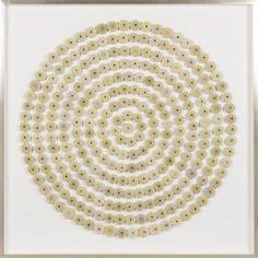 Sea Urchin Circles: Green   Natural Curiosities