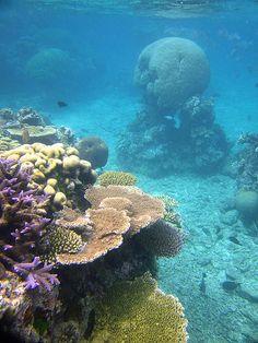Arrecife de coral.
