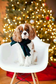Christmas is more magical if you have a special Pooch to share it with you!! :) www.teacuptutucharm.com xoxo