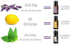 Los aceites esenciales en mi casa - 9 Meses Baby