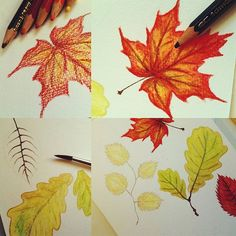 #flowleaf2015 #autumnleaves #autumn #automne #aquarelle #watercolor #pencils #workinprogress
