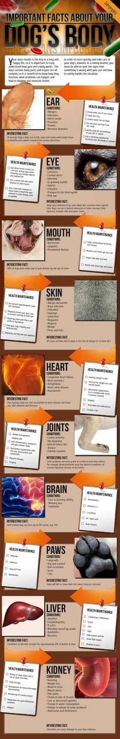 ♥ Cool Pet Care ♥ Canine Health Facts - Check this out: a stunning visual list of what to look for, what to do, and what to know about keeping your dog healthy and happy. Talk about keeping it simple! Food Dog, Dog Food Recipes, Yorkies, Diy Pet, Cat Body, Cat Health, Health Facts, Dental Health, Cat Facts