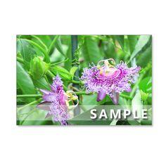 5枚組ポストカードです。 どうしても撮影したかったトケイソウ。 紫色のトケイソウは、「イノセンス」です。 同じ季節に咲く花、トケイソウ3枚とクレマチス2枚の組...|ハンドメイド、手作り、手仕事品の通販・販売・購入ならCreema。
