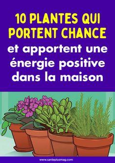 10 plants that bring luck and bring positive energy to the house - New Deko Sites Plantes Feng Shui, Reiki, Energie Positive, Garden Online, Herbs For Health, Interior Plants, Balcony Garden, Indoor Balcony, Positive Attitude