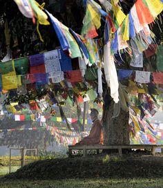 Buddhist monk, Lumbini Garden, Nepal