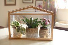 Gold greenhouse 21