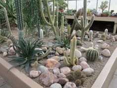 10 Perfect Cactus Garden Design Ideas for Your Garden - Gartengestaltung Outdoor Cactus Garden, Succulent Landscaping, Front Yard Landscaping, Backyard Landscaping, Indoor Cactus, Cacti Garden, Landscaping Ideas, Pinterest Garden, Dry Garden