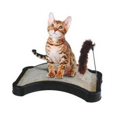 Finepet Kitty Scratcher W/ Play Tail Toy And Cat Nip * Check this awesome product by going to the link at the image. (This is an affiliate link and I receive a commission for the sales) #CatCare