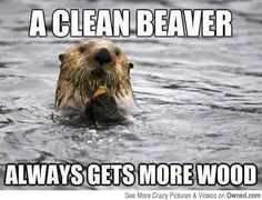 A clean beaver....also this is an otter....not a beaver.