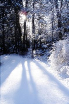 Winter Scene at Kittatinny Valley State Park, Andover, New Jersey