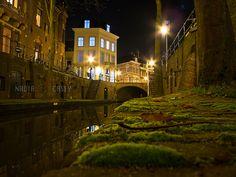 Moss up close | Flickr - Photo Sharing!