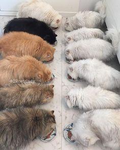 Veja o dia a dia de uma garota que adotou 12 gatos