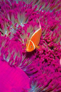 #underwater #fish #pink #orange #aqua