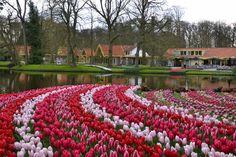 Parque Keukenhof, Jardín de Tulipanes. Holanda