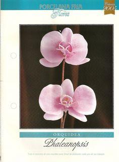 Todo Flores de Porcelana Fria: Paso a Paso orquidea Phaleanopsis 01