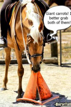 Horse eating carrots, lol