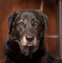 Dog Years by Melissa Van Londersele on 500px