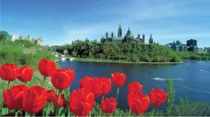 """The Living Landscapes garden at the Ottawa Home & Garden Show, March will feature a special """"Artists' Garden"""" by the Canadian Tulip Festival! Kingston, Ottawa Tulip Festival, Ottawa Tourism, Lac Saint Jean, Charlevoix, Visit Canada, Garden Show, World Photo, Garden Photos"""
