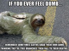 Funny Animal Pictures With Captions share cute things at www.sharecute.com