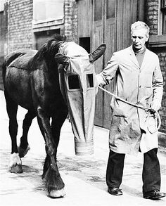 1940 Atlar İçin Gaz Maskesi