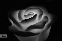 Rose di luce by Alessio Maraldi on 500px