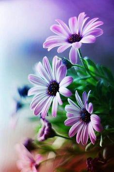 Cheap flowers chrysanthemum, Buy Quality flower bin directly from China flower tattoo Suppliers: New Beautiful Purple Flower Diy Diamond Painting Embroidery Cross Stitch Full Diamond Mosaic Picture Pasted Needlework Decor Amazing Flowers, My Flower, Pretty Flowers, Purple Flowers, Flower Diy, Purple Daisy, Spring Flowers, Daisy Flowers, Exotic Flowers