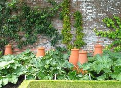 rhubarb forcing pots - gonna read about this. i have rhubarb, but have never heard of forcing pots? Potager Garden, Veg Garden, Edible Garden, Vegetable Gardening, Garden Theme, Permaculture, Garden Projects, Garden Inspiration, Garden Design