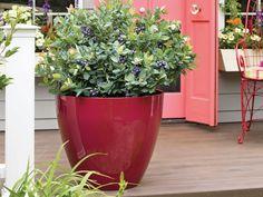 Heidelbeere BrazelBerries ® - borůvka Buxus, Rarity, Breeze, Planter Pots, Berries, Pink, Outdoor, Blog, Inspiration
