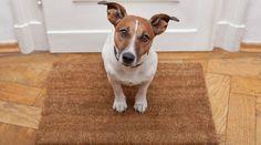 5 dicas para ser produtivo no home office com um pet
