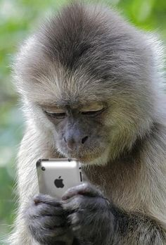 Checking the market prices for banana  #funnyanimals #lolanimals #animalsfunny
