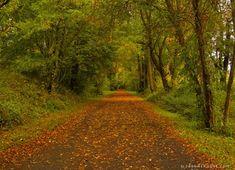 Virginia Creeper Trail   Autumn Leaves on the Virginia Creeper Trail.
