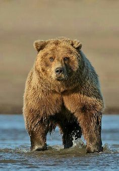 Grizzly On Guard!