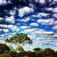 Beautiful clouds over the plains of the Ngala Game Reserve.