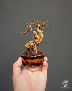 Mini Bonsai, Bonsai Garden, Desserts, Photography, Food, Prophetic Art, Projects, Tailgate Desserts, Deserts