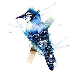blue jay feather tattoo - Google zoeken