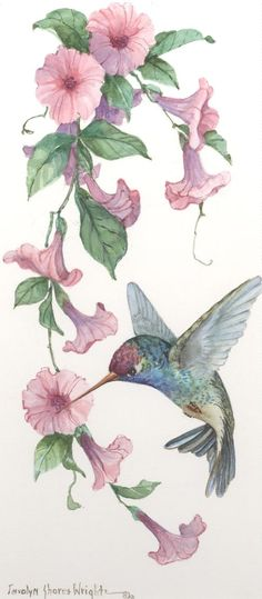 Broad-Billed Hummingbird with Morning Glories watercolor