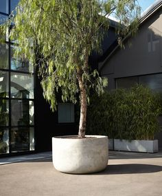 IGIGANTI - Designer Plant pots from antoniolupi ✓ all information ✓ high-resolution images ✓ CADs ✓ catalogues ✓ contact information ✓ find. Potted Plants, Cactus Plants, Plant Pots, Contemporary Vases, Matt Brown, Colored Vases, Metal Structure, Plant Decor, Natural Materials