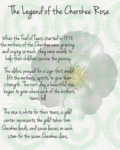 This is why I have a cherokee rose tattooed on my arm. The Legend of the Cherokee Rose Native American Prayers, Native American Spirituality, Native American Cherokee, Native American Symbols, Native American History, Native American Indians, Native Indian, Native Art, Native Symbols