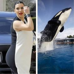 Kim Kardashian and a Killer Whale
