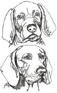 dog learning,dog tips,dog care,teach your dog,dog training Weimaraner, Vizsla, Doberman, Advanced Embroidery, Free Motion Embroidery, Drawing Sketches, Art Drawings, Free Stencils, Wood Burning Art