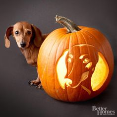 Cuteness alert! Carve this miniature dachshund on your pumpkin or choose your favorite canine from our free gallery.