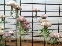 steampunktendencies:  Jellyfish Air Plants(PetitBeast)