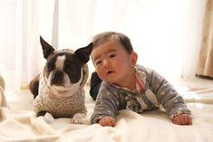 Having A Pet May Boost Your Baby's Gut Health
