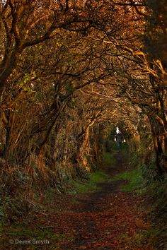 Ballynoe Tree Tunnel, which leads to the to an ancient Stone Circle Monument which is thought to date back to the period succeeding the Early Bronze Age, Ballynoe, Northern Ireland Copyright: Derek Smyth