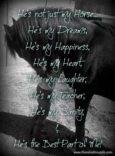 """I can't live without my horse; I never grew out of the """"I Love Horses So Freaking Much"""" Stage, evidently. Equine Quotes, Equestrian Quotes, Equestrian Problems, My Horse, Horse Girl, Horse Tack, Pretty Horses, Beautiful Horses, Inspirational Horse Quotes"""