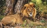 002682-08-wildlife-safari-lion.jpg