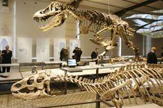 Natuurhistorisch museum in Brussel derde beste dinomuseum ter wereld