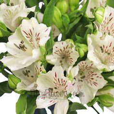 FiftyFlowers.com - White Alstroemeria Fresh Flower
